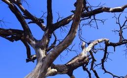 Ramos secados da árvore inoperante sombrio com céu foto de stock