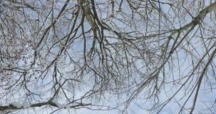 Ramos secos das árvores contra o céu na mola adiantada video estoque