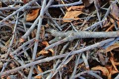 Ramos secos do galho com as folhas murchos como a floresta do outono e o fundo da madeira Fotografia de Stock