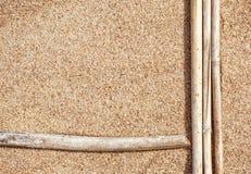 Ramos secos na areia Fotografia de Stock Royalty Free