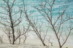 Ramos secos na costa foto de stock