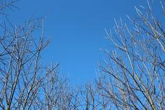 Ramos sem folhas e o céu azul fotografia de stock royalty free