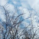 ramos sem pássaros Foto de Stock Royalty Free