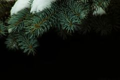 ramos spruce cobertos com a neve fotografia de stock