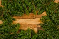 Ramos Spruce em um fundo de madeira imagem de stock royalty free