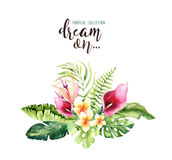 Ramos tropicales dibujados mano de la flor de la acuarela Hojas de palma, árbol exóticos de la selva, elementos tropicales de la  Imagen de archivo libre de regalías