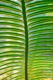 Ramos verdes Imagem de Stock