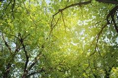 Ramos verdes fotografia de stock royalty free