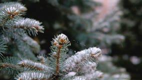 Ramos verdes do abeto vermelho, abeto sob a neve Árvore verde A primeira neve, outono, mola, inverno adiantado Movimento lento vídeos de arquivo