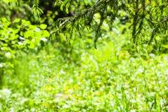 ramoscelli attillati sopra la radura verde della foresta Fotografie Stock Libere da Diritti