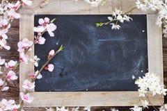 Ramoscelli con i fiori della ciliegia Fotografia Stock Libera da Diritti