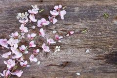 Ramoscelli con i fiori della ciliegia Immagini Stock