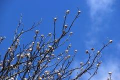 Ramoscelli con il fondo del cielo blu Fotografie Stock Libere da Diritti