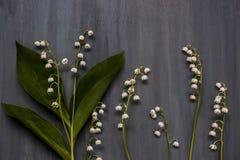 Ramoscelli del mughetto su fondo di legno blu scuro Fotografia Stock