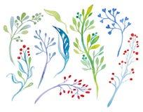 Ramoscelli dell'acquerello con i germogli e le foglie Insieme degli elementi disegnati a mano isolati su fondo bianco Fotografie Stock Libere da Diritti