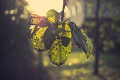 Ramoscelli di autunno fotografia stock libera da diritti