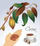 Ramoscelli di cacao di fioritura Immagini Stock Libere da Diritti