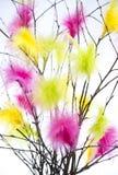 Ramoscelli di Pasqua con le piume colorate Immagine Stock