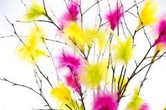 Ramoscelli di Pasqua con le piume colorate Fotografia Stock Libera da Diritti