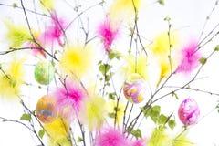 Ramoscelli di Pasqua con le piume e le uova colorate Fotografia Stock