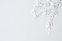 Ramoscelli ghiacciati su bianco immagini stock