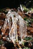 Ramoscelli imballati in ghiaccio sul modo ad ovest Scozia dell'altopiano immagini stock libere da diritti