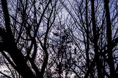 Ramoscelli neri con il cielo viola immagini stock