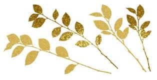 Ramoscelli strutturati dorati con le foglie Fotografie Stock