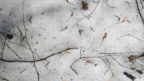 Ramoscelli sul pavimento della foresta La neve sta fondendosi La neve è melti fotografia stock libera da diritti
