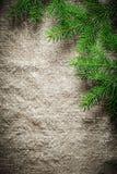 Ramoscelli verdi del pino sul fondo di insaccamento fotografia stock libera da diritti