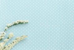 Ramoscello con i fiori bianchi Priorità bassa del puntino di Polka Fotografia Stock