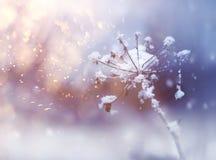 Ramoscello congelato del fiore nel bello ackground delle precipitazioni nevose di inverno immagini stock libere da diritti