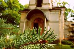 Ramoscello degli alberi di Natale Immagini Stock Libere da Diritti