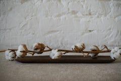 Ramoscello del cotone sul piatto di legno Immagine Stock