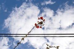 Ramoscello del fiore e cavi elettrici intersecati Immagine Stock