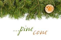 Ramoscello del pino con il cono dorato Fotografia Stock Libera da Diritti
