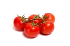 Ramoscello del pomodoro rosso su fondo bianco Fotografia Stock Libera da Diritti