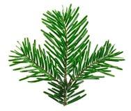 Ramoscello dell'albero di abete isolato su bianco Immagini Stock