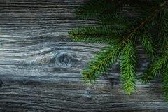 Ramoscello dell'albero di abete sul bordo di legno fotografie stock libere da diritti