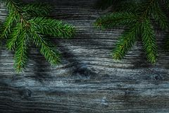 Ramoscello dell'albero di abete sul bordo di legno d'annata fotografie stock libere da diritti