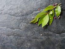 Ramoscello della foglia e del pepe di alloro freschi su fondo di pietra nero Fotografia Stock