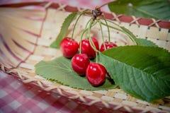 Ramoscello delle ciliege, ciliege mature Fotografia Stock Libera da Diritti