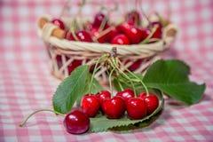 Ramoscello delle ciliege, ciliege mature Fotografia Stock