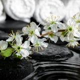 Ramoscello di fioritura della prugna, asciugamani bianchi sulle pietre di zen con l'ondulazione con riferimento a Immagini Stock