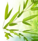 Ramoscello ed acqua di bambù fotografia stock libera da diritti