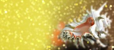 Ramosus Chicoreus Seashell на сверкная предпосылке bokeh Стоковая Фотография RF