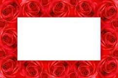 ramowa czerwona róża Obraz Stock
