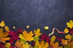 ramowa jesień ilustracja opuszczać klonu wektor Natura spadku szablon dla projekta, menu, pocztówka, sztandar, bilet, ulotka, pla obrazy royalty free
