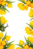ramowa kwiat wiosna Zdjęcia Royalty Free