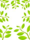 ramowa roślina royalty ilustracja